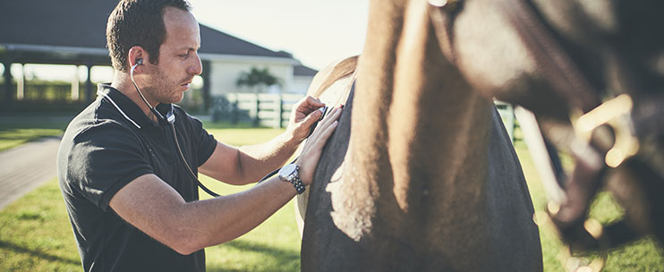 Veterinarian examining horse with image of stomach