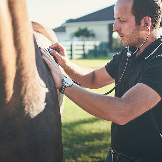 Equine asthma