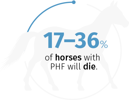 17%–36% of horses with PHF will die